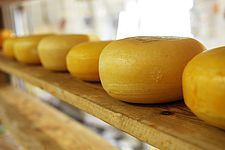 If you are looking for cheese from Italy: Italian cheese makers